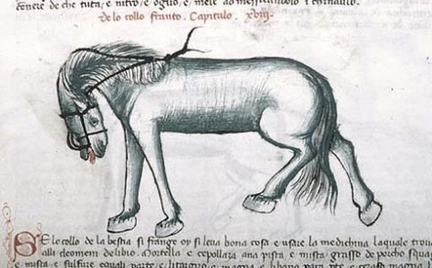 Από: Livro de la Menscalcia de li cavalli, -Apulia στην Ιταλία, αρχές 15ου αιώνα